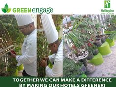 Holiday Inn Dubai's Green Initiative Bears Fruit!