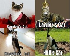 Not quite as funny as the first, but still, cute kitties AND WWE? Awesomeness!