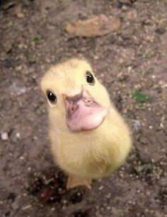 hello there duck. :)