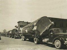 historic logging western washington