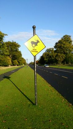 Runners meet at Phoenix park Dublin Dublin, Wind Turbine, Runners, Phoenix, Meet, Signs, Park, Hallways, Joggers