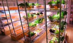 IKEA's Space10 is creating aquaponics systems so restaurants can supply food right on site.