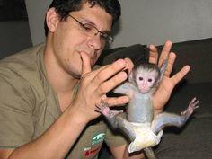 Filhotes são atração de zoológico no Rio