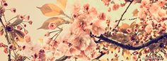 Cherry Blossoms Facebook Cover