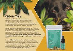 HempMate CBD-Öl PET  Unsere Tiere verdienen es genauso wie wir Menschen, ihr Gleichgewicht zu finden. Unser CBD-Öl für Tiere haben wir daher bewusst mit einem geringen CBD-Anteil von 5% (500mg CBD) ausgestattet, um eine fürsorgliche Dosierung zu gewährleisten.  Die Vorteile auf einen Blick: 100% Vegan und Organic 100% ohne Zusatzstoffe 100% aus biologischen Anbau Full Spectrum CO2-Liquid Extraktion Entourage-Effekt Hanferzeugnis aus EU-Sortenkatalog. CBD:5% (500 mg) THC:<0.2% Cannabis, Entourage, Vegan, Organic Gardening, Hemp, Plants, Animales, Benefits Of, Ganja
