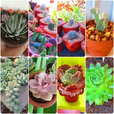 Discover an exquisite collection of well loved finds in succulents and cactus at Cassiels Succulent World! Cebu, Better Love, Cactus, Succulents, Amazing, Collection, Succulent Plants, Cebu City, Men's Fitness Tips