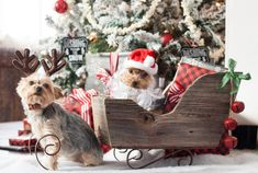 Dog Christmas Card I