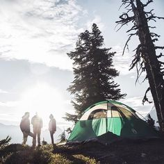 Photo by @andrewjgolesch - Location: Mount Baker #thetrickytree