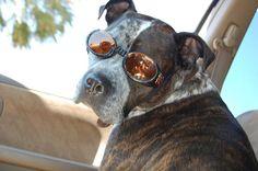 Meet a Lowcountry Dog: Mordigen
