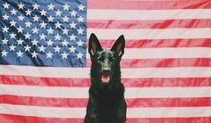 Beautiful stock photos of america,  American Culture,  American Flag,  Anticipation,  Black