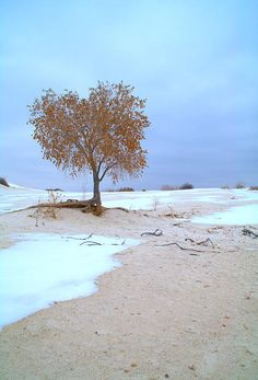 lone tree, White Sands National Monument, New Mexico | Brian Harig