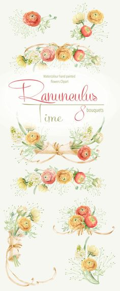 Watercolour Clipart collection of Ranunculus bouquets