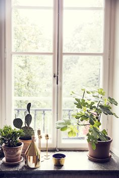 Plant Decor, House Plants, Beautiful Homes, Window Sill Decor, Home Flowers, Deco Nature, Green Plants, Decoration, Lofts