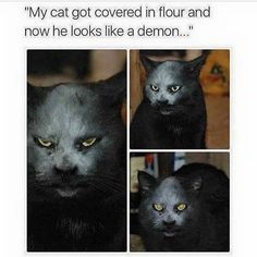 27 Cat Pictures That Are Never Not Funny - Cute funny animals - Funny Animal Memes, Cute Funny Animals, Funny Animal Pictures, Freaky Pictures, Random Pictures, Funny Cute Cats, 9gag Funny, Funny Memes, Funniest Memes