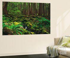 Rainforest, Mossy Rocks, Mt Rainier National Park, Washington, USA Wall Mural by Stuart Westmorland at Art.com
