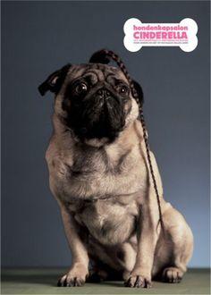 Read more: https://www.luerzersarchive.com/en/magazine/print-detail/cinderella-29584.html Cinderella Campaign for a canine grooming salon. Tags: Lemon Scented Tea, Amsterdam,Cinderella,Ewoudt Boonstra,Peter Verduin