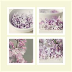 Lilac Collection - (set of 4 - 5x5 fine art prints) - Purple Lilac Grouped Set of Flowers - Original Wall Art. $30.00, via Etsy.