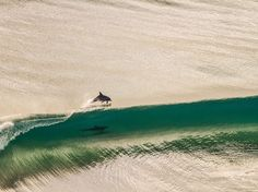 Dolphin Picture -- Australia Photo -- National Geographic Photo of the Day