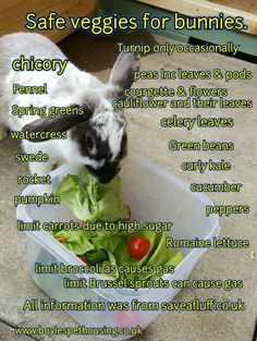 Rabbit Healthy Diet. Safe veggies for Rabbits keep your bunny safe