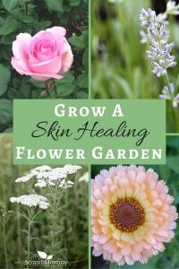 Learn How To Grow A Skin Healing Flower Garden! Rose, Lavender, Yarrow, & Chamomile.- Scratch Mommy