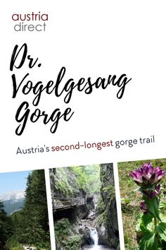 The name Dr-Vogelgesang-Klamm doesn't exactly trip off the tongue. But it is worth seeking out this gorge hike near the Kalkalpen National Park at Spital am Pyhrn. The wooden walkways and steps past waterfalls and rock faces make this a great family day out and the hike can be extended to nearby mountain huts... #austria #upperaustria #gorge #drvogelgesanggorge Wooden Walkways, Cultural Capital, Family Days Out, Nature Reserve, Waterfalls, Austria, National Parks, Mountain, Faces