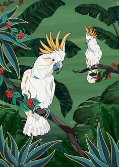 Parrot illustration by Andreas Preis made using Adobe Fresco. Hang Ten, Bright Colors Art, African Grey Parrot, Flash Art, Bird Illustration, Illustrations And Posters, Pet Birds, Art Inspo, Design Art