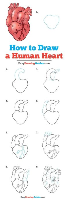 How to Draw a Human Heart &; Really Easy Drawing Tutorial How to Draw a Human Heart &; Really Easy Drawing Tutorial Princess Magnolia Drawing+Art Inspiration Learn How to Draw […] painting for beginners Easy Pencil Drawings, Doodle Drawings, Art Drawings Sketches, Pencil Art, Disney Drawings, Easy Heart Drawings, Drawings Of Hearts, Heart Pencil Drawing, Sad Drawings