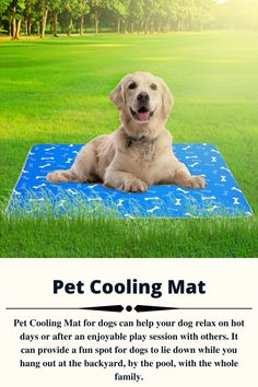 Pet Cooling Mat for dogs can help your dog relax on hot days or after an enjoyable play session with others. It can provide a fun spot for dogs to lie down while you hang out at the backyard, by the pool, with the whole family. #coolingmatfordogs #coolingmattresstopper #coolingmattresspad #coolingmatfordogsdiy #coolingmat Pet Cooling Mat, Dog Leg, Best Mattress, Pet Mat, Dogs Golden Retriever, Cool Pets, Hot Days, Happy Dogs, Large Dogs