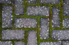 Bikarbonat – en känd motståndare i trädgården. Foto: Per-Olov Eriksson / IBL Bildbyrå Dina, Bra Hacks, Garden Inspiration, Gardening Tips, Stepping Stones, Diy And Crafts, Life Hacks, Pergola, Projects To Try