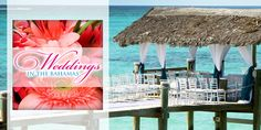 Weddings in the Bahamas - A Technology Therapy™ Group Case Study Small Business Marketing, Case Study, Vows, Base, Weddings, Facebook, Happy, Projects, Log Projects
