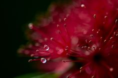 Raindrops on flowers... #macrophotography #raindrops #flowers #nature #botanical