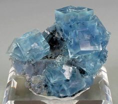 Blue phantomed Fluorite with Pyrite atop a drusy matrix from Le Burg Mine, France