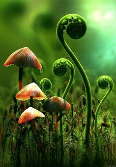 Moss, ferns and fungi. Mushroom Art, Mushroom Fungi, Orange Mushroom, Fotografia Macro, Macro Photography, Nature Photography Flowers, Landscape Photography, Portrait Photography, Wedding Photography