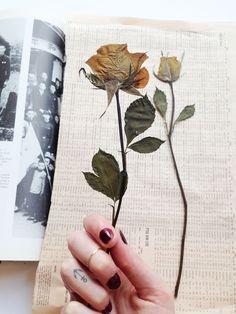 Pressed flowers on newspaper