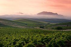 sicily-extensive-vineyard-view-at-sunrise.jpg 1,280×852 pixels