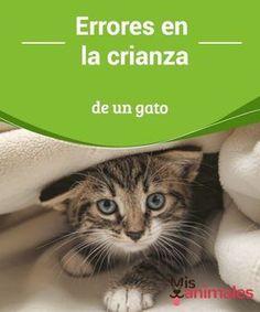 diabetes mellitus canina y felina naturaleza o crianza