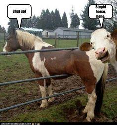 Image of: Liquid Facelift Pinterest Funny Horse Memes 13 Picsvitaminha Vitaminha Horses Funny