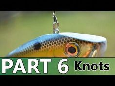 An introduction to tying knots in bass fishing. Also, how to rig certain baits like the Texas-rig is discussed in Part 6 of the Beginner's Guide to Bass Fish. Fly Fishing For Beginners, Fishing Basics, Bass Fishing Tips, Fishing Knots, Gone Fishing, Carp Fishing, Best Fishing, Trout Fishing, Saltwater Fishing