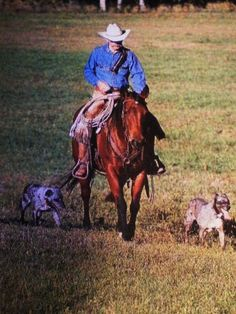 Hangin Tree Cowdogs have been Trayer's top hands for more than a decade @ Cottonwood Ranch which he's managed more than 30 years Dog Clinic, Dogs With Jobs, Aussie Dogs, Cattle Dogs, Ranch Life, R Dogs, Dog Rules, Cowboy And Cowgirl, Australian Cattle Dog