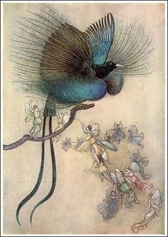 """""""The most beautiful bird of paradise"""", p. 210, ill. 26, Warwick Goble, the Waterbabies, 1909"""