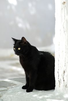 black cat at Mykonos.  ((You know I love black kitties! Thank you dear Freebird))