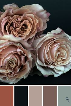 ZJ Colour Palette 407 #colourpalette #colourinspiration