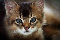 Look at those eyes♥