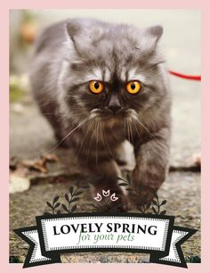 "Zolux joins Yummypets and offers you many prizes to win! For a chance to win, it's very simple, follow the steps below: Follow Zolux on Pinterest: http://ymp.io/u/Dlm - Follow Yummypets on Pinterest: http://ymp.io/u/tvb - Follow the board ""Lovely spring for your pets !"": http://ymp.io/u/sei - Repin the products that you would like to win - Results on April 13th 2015. GOOD LUCK! #game #pets #cat  #kitty #kitten #gift #petsupply #meow #pinterest #yummypets #zolux"