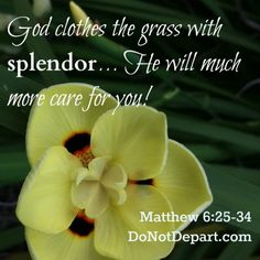 God Will Care for You – Matthew 6:30