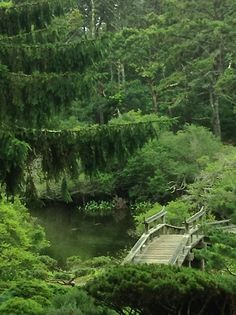 Image tagged in kdks Beau Site, Island Life, Summer Travel, Shades Of Green, Places To See, Paths, Martha's Vineyard, River, Forests