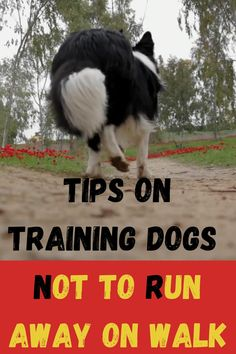 Obedience Training For Dogs, Dog Training Come, Dog Training Videos, Puppy Care, Pet Care, Natural Dewormer For Dogs, Red Poodle Puppy, Old Dog Quotes, Dog Hand Signals