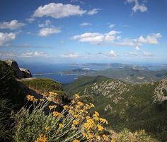 Buongiorno dal #montecapanne il più alto dell'#elba grazie a @hotelbelmare per la foto. Continuate a taggare le vostre foto con #isoladelbaapp il tag delle vostre vacanze all'#isoladelba. Visita http://ift.tt/1NHxzN3