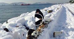 Todos Os Dias Esta Mulher Cuida De Centenas De Gatos De Rua e Nem a Neve a Impede