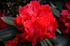 I bei fiori del giardino <3